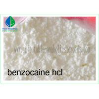 Quality Local Anesthetic Agent Benzocaine Hydrochloride / Benzocaine HCl 23239-88-5 for sale