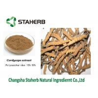 Quality Mushroom extract Cordyceps extract Polysaccharides Male Enhancement Powder for sale