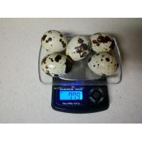 China Quality Fertilized Quail Eggs on sale