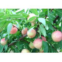 Quality 100% pure sweet peach powder China wholesale/ factory price juicy peach powder flavour for sale