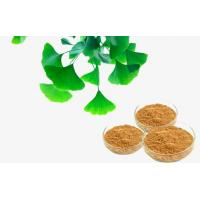 Pharmaceutical Natural Botanical Ginkgo Extracts For improving mental performance Manufactures