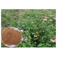 China Chicory Acid Pure Herbal Supplements , Whole Herb Echinacea Purpurea Extract on sale
