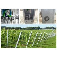 China Hot Dipped Galvanized Grape Vine Posts / Heavy Duty Vineyard End Posts For Grape Growing on sale