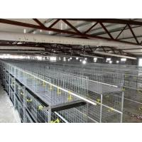 Wire Mesh Baby Chicken Cage for Sale Manufactures