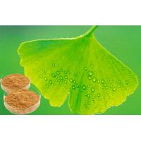 EP 9.0 Natural Botanical Ginkgo Extracts For Help improve memory Manufactures