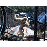 Buy cheap Hand Woven Animal-Gibbon Mesh Fencing Stainless Steel 1.2mm - 3.2mm Rope from wholesalers