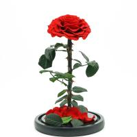 Fashion Dried Long Stem Rose Flower In Glass With Beautiful Appearance Manufactures