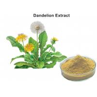 China 4% Flavonoids Organic Dandelion Root Extract , Dandelion Leaf Extract Anti - Inflammatory And Antiviral on sale