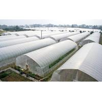 Tunnel Polyethylene Film Greenhouse / Plastic Shed Simple Galvanized Steel Frame Manufactures