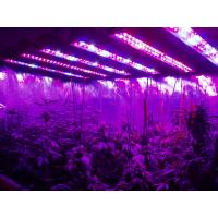 AC85-265v Hydroponic Plant Grow Light 95 Watt High Power Led Grow Lights Manufactures