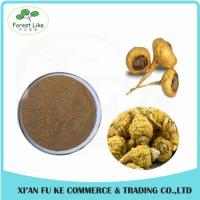 Herbal Sex Powder Men Health-care Anti-fatigue Product Maca Root Extract Powder Manufactures