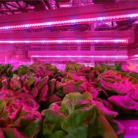 SMD 2835  Led Indoor Garden Lights For Flower / Vegetable , 6-8m Sensor Distance Manufactures