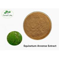 China Fine Size Plant Herbal Extract Powder Natural Equisetum Arvense Extract on sale