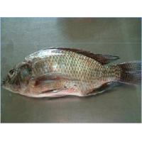 China whole clean tilapia gutted scaled on sale