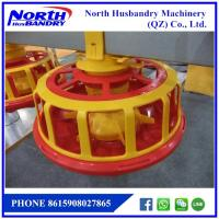 China Automatic pan poultry feeding line on sale