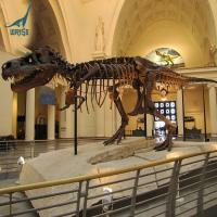 Life Size T-rex Dinosaur Skeleton Model for Sale Manufactures