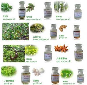 Essential oil,organic essential oil,pure natural essential oil Manufactures