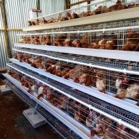 China Cheap Price Galvainzed Chicken Poultry Farm Cage Layer Chicken Coop For 10000 on sale