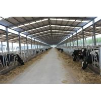 Automation And Sanitary Pre-made Steel Structural Cowshed Framing Systems Manufactures