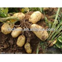 China ROOT GROWTH PROMOTER on sale