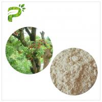 Water Solvent Bayberry Bark Extract Powder , Myricetin Anti Inflammatory Supplements Manufactures