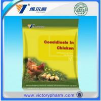 China Chicken coccidiosis scattered wholesale
