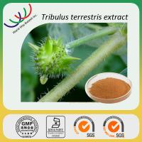 China manufacturer sales high quality 40% total saponins tribulus terrestris extract Manufactures