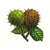 China Horse Chestnut Extracts Aescin 20%, natural pharmaceutical ingredients, 98% pure ingredients on sale