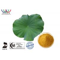 Dried Lotus Leaf Weight Loss , Chinese Quality Herbal Extracts Fat - Burner Flavonoids