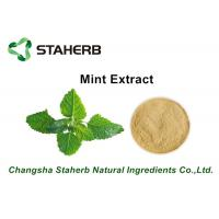 Herbal Extract Mint Plant Extract Powder , Natural Herbal Extracts ISO Certified Manufactures