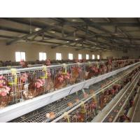 Buy cheap 96 Birds, 120 Birds, 128 Birds, 160 Birds, 256 Birds Layer Chicken Cages from wholesalers