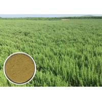 China Ursolic acid Natural Cosmetic Ingredients Rosemary Extract Anti - oxidation CAS 77 52 1 on sale