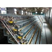 A Type Quail Laying Cage , Commercial Pvc Quail Cage Customized Service Manufactures