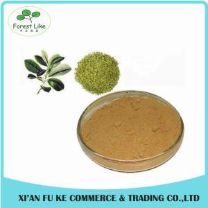 Best Selling Natural Yerba Mate Extract 25 % Polyphenol,20 % Tannin Acid