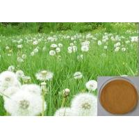 China Dandelion Extract for  liver diseases,Brown Powder,Herbal Extract/Plant Extract on sale
