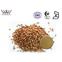 China Testosterone Fenugreek Extract Powder Trigonella Foenum Graecum Extract Regulate Blood Sugar on sale