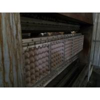 Egg Tray Packaging Pulp Molding Machine With Rotary Vacuum Moulding System Manufactures
