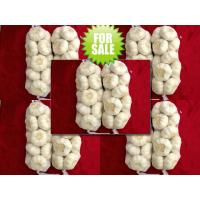 Pure White Garlic With Small Packing Manufactures