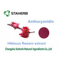 Hibiscus Flower Extract Natural Cosmetic Ingredients Anthocyanin 10% Powder Manufactures