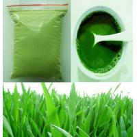 Grade A Organic Certified Barley Grass Powder Real Manufacturer Manufactures