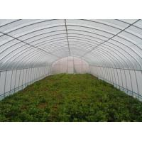 Galvanized Steel  Hoop Style Greenhouse , Vegetable Pe Film Greenhouse Side Height 1 / 2m Manufactures