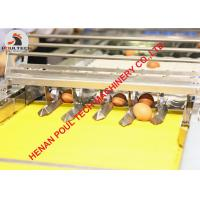 304 Stainless Steel Materials Automatic Chicken Egg Grading Machine & Egg Packing Machine for Poultry Farm 3000 pcs/Hour Manufactures