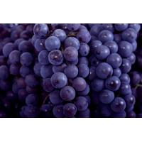 China Chinese Globe Juicy Fresh Red Seedless Grapes  9KG / Foam ctns on sale