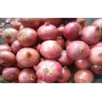 Sweet Red Natural Fresh Onion Bulbs Contains Rich Microelement For Market, The fleshy scales, Light yellow and soft Manufactures