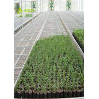 Hydroponic Trays Seedling Greenhouse Grow Beds For Plants Seedbed / Vegetable Manufactures