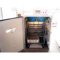 Quality Small Incubator(OCI-50) for sale