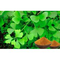 Natural Nutrition Ginkgo Biloba For Helping Improve Memory CEP,GACP Certificated Manufactures