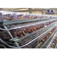 China Hot Dipped Galvanized Wire Mesh Poultry Hen Layer Chicken Cage on sale