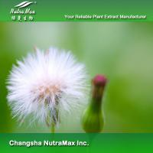 China Dandelion Extract on sale