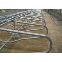 Quality Auto Galvanized Steel Pipe Cow Free Stall Dairy Farm Double Type Free Stalls for sale
